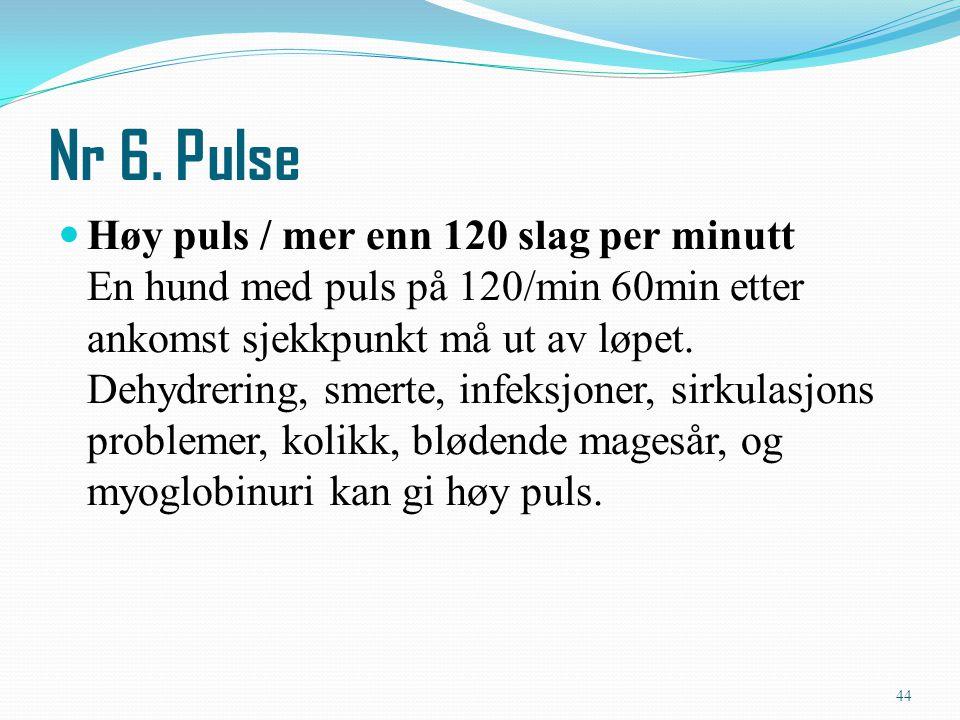 Nr 6. Pulse