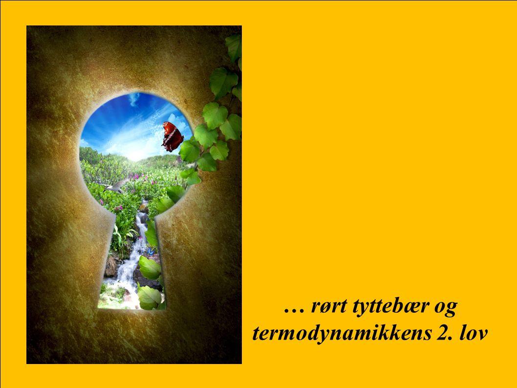 … rørt tyttebær og termodynamikkens 2. lov