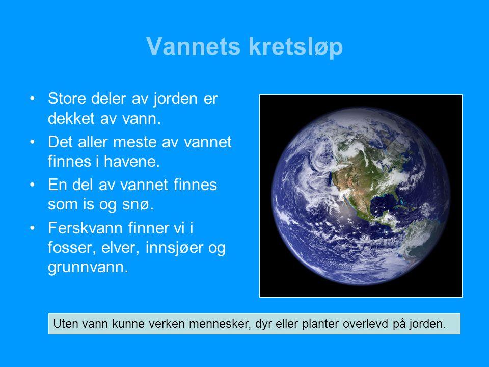 Vannets kretsløp Store deler av jorden er dekket av vann.