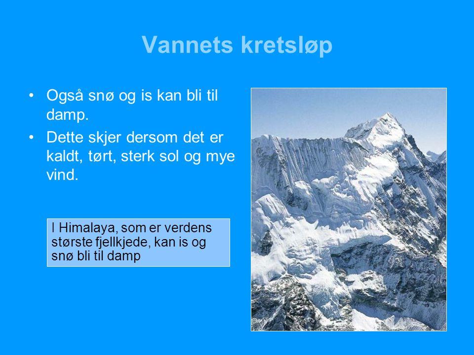 Vannets kretsløp Også snø og is kan bli til damp.