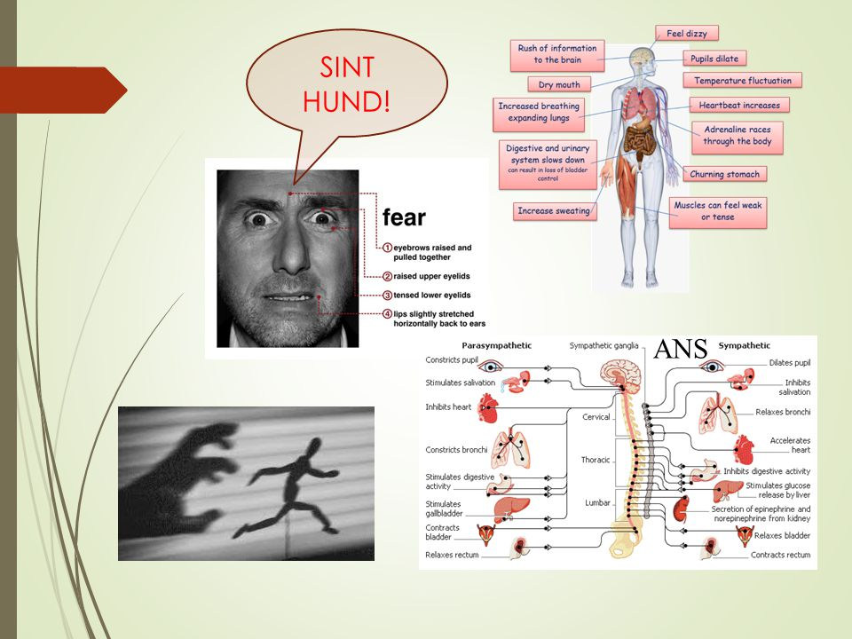 SINT HUND! ANS