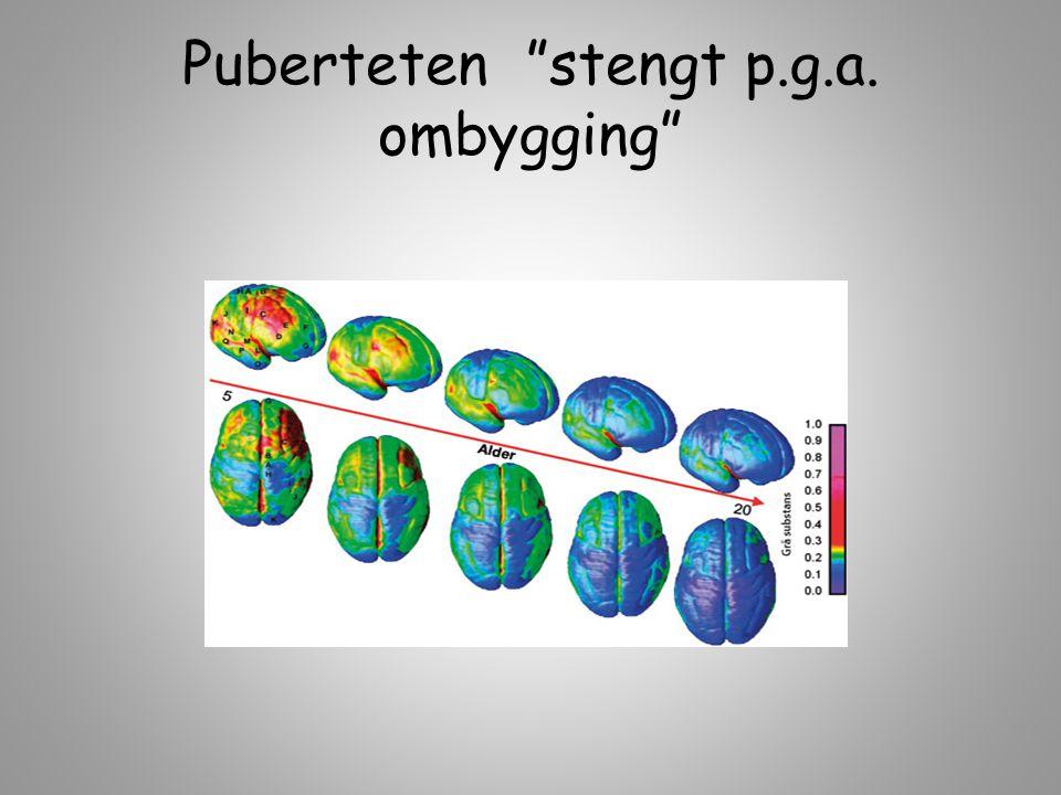 Puberteten stengt p.g.a. ombygging