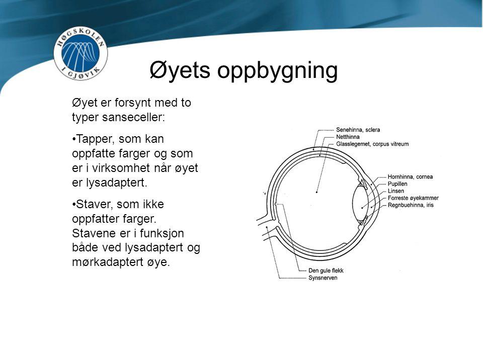 Øyets oppbygning Øyet er forsynt med to typer sanseceller: