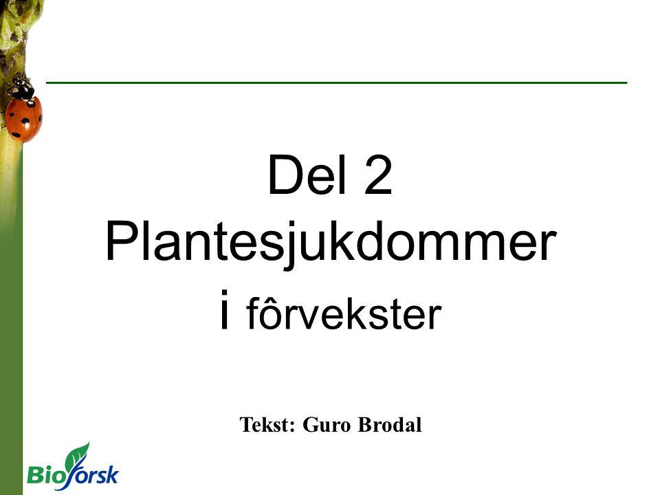 Del 2 Plantesjukdommer i fôrvekster Tekst: Guro Brodal