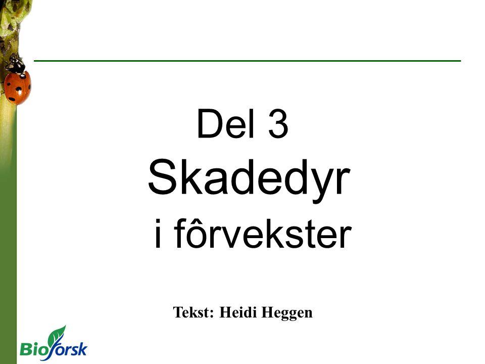 Del 3 Skadedyr i fôrvekster Tekst: Heidi Heggen