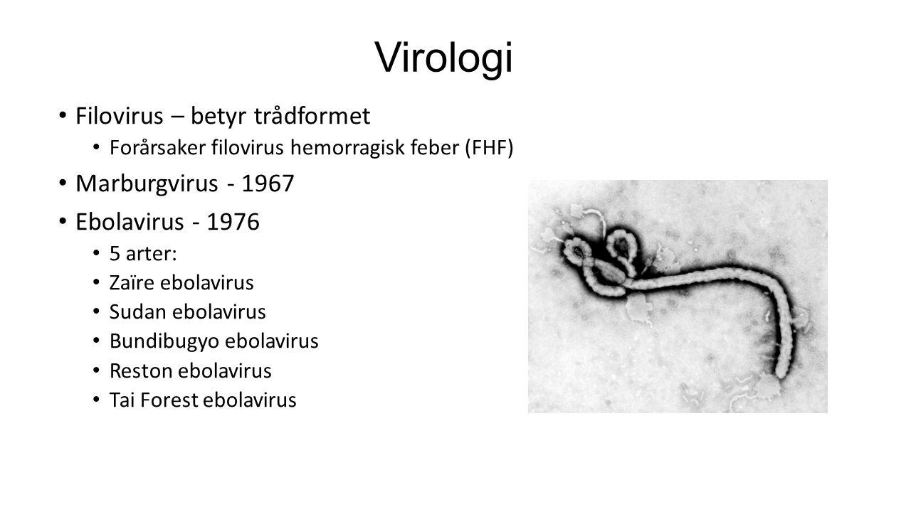 Virologi Filovirus – betyr trådformet Marburgvirus - 1967