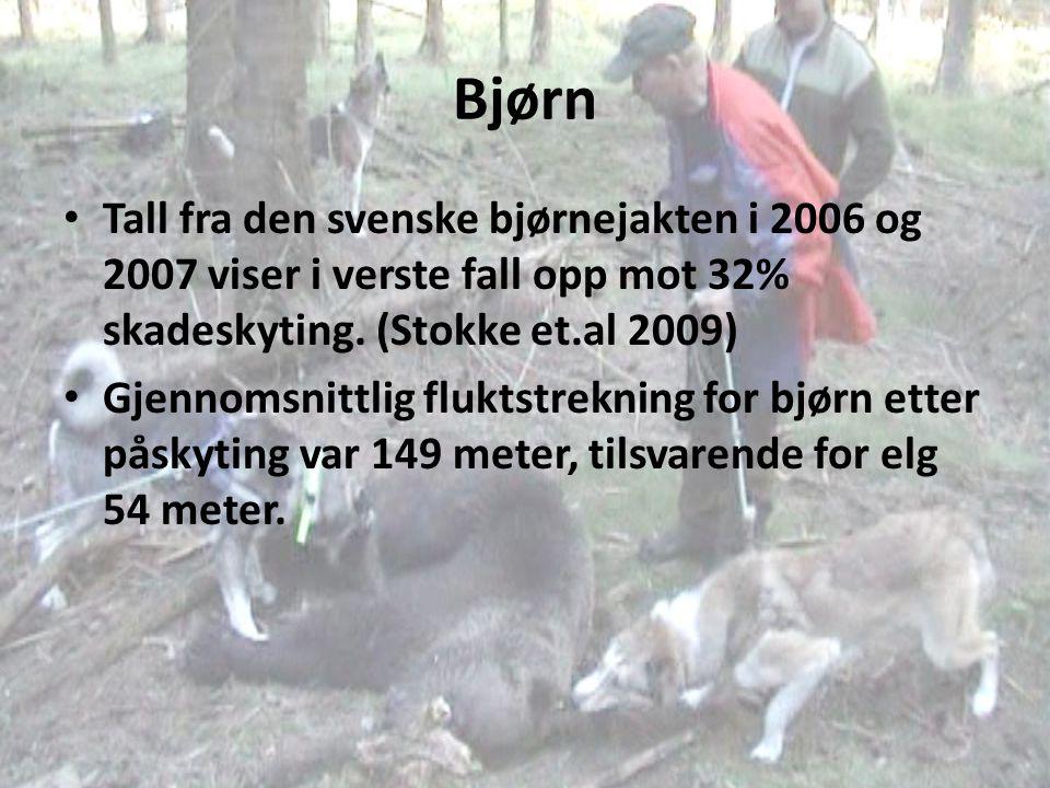 Bjørn Tall fra den svenske bjørnejakten i 2006 og 2007 viser i verste fall opp mot 32% skadeskyting. (Stokke et.al 2009)