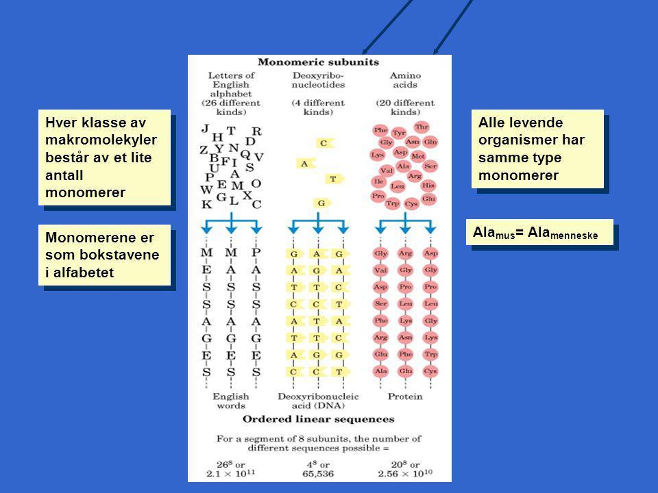 Hver klasse av makromolekyler består av et lite antall monomerer
