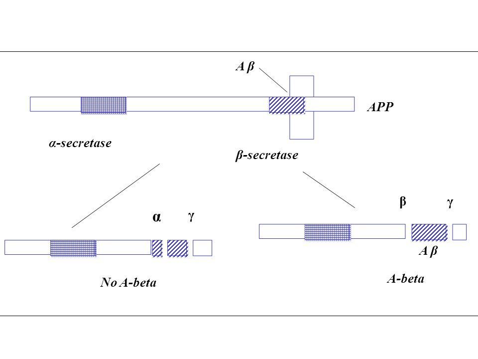 A β APP α-secretase β-secretase β γ α γ A β A-beta No A-beta