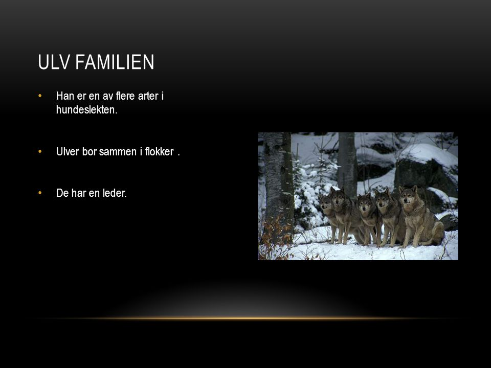 Ulv familien Han er en av flere arter i hundeslekten.