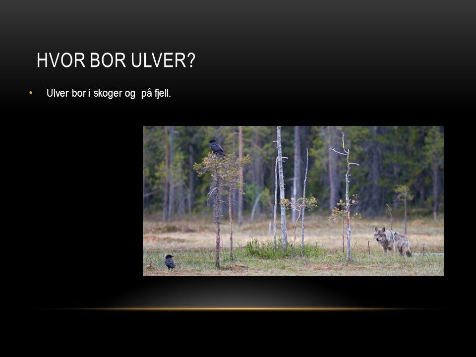 Hvor bor ulver Ulver bor i skoger og på fjell.