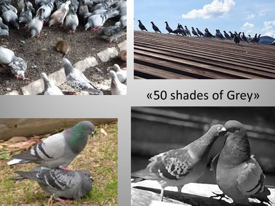 «50 shades of Grey»