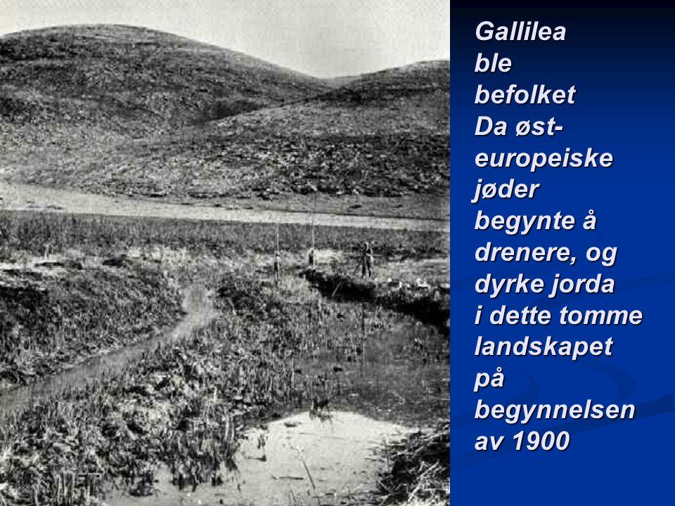 Gallilea ble. befolket. Da øst- europeiske. jøder. begynte å. drenere, og. dyrke jorda. i dette tomme.