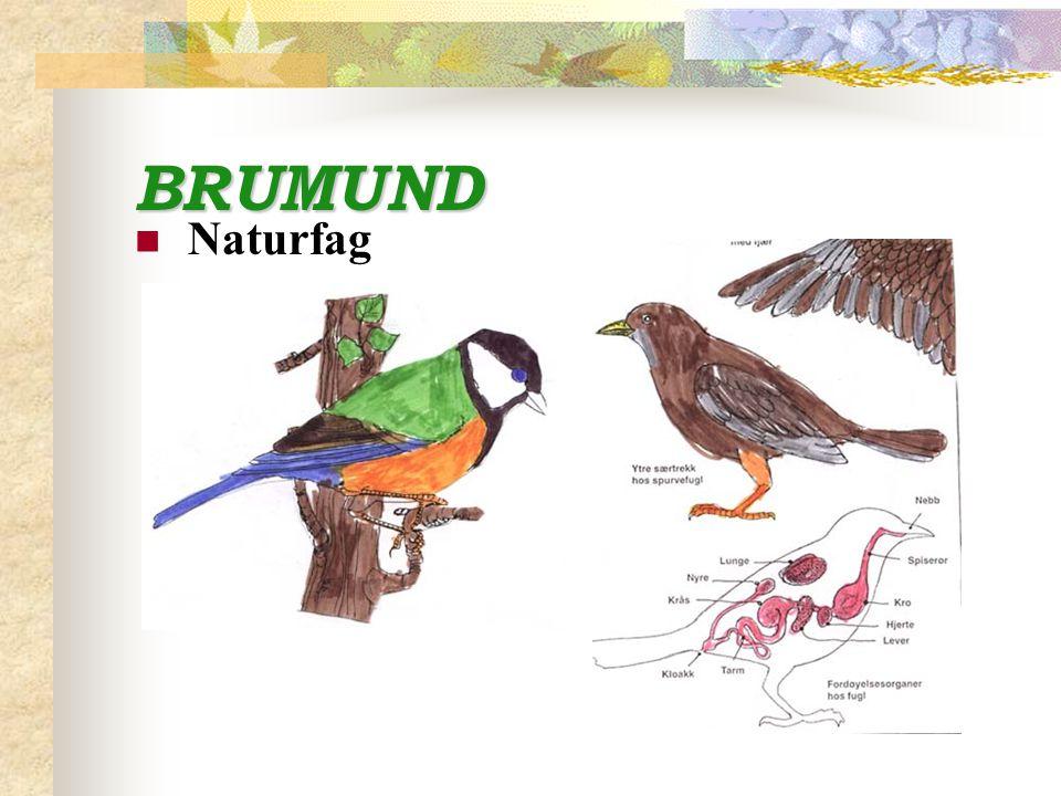BRUMUND Naturfag