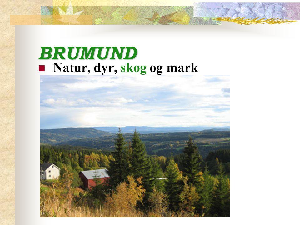 BRUMUND Natur, dyr, skog og mark