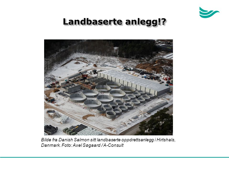 Landbaserte anlegg!. Bilde fra Danish Salmon sitt landbaserte oppdrettsanlegg i Hirtshals, Danmark.