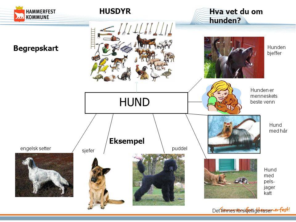 HUND HUSDYR Hva vet du om hunden Begrepskart Eksempel Hunden bjeffer