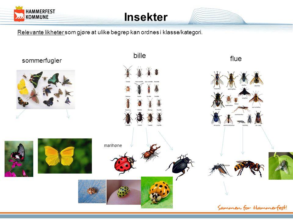 Insekter bille flue sommerfugler
