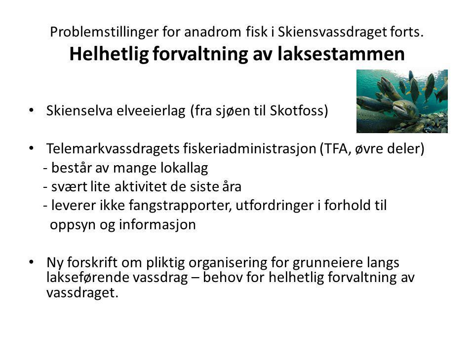 Problemstillinger for anadrom fisk i Skiensvassdraget forts