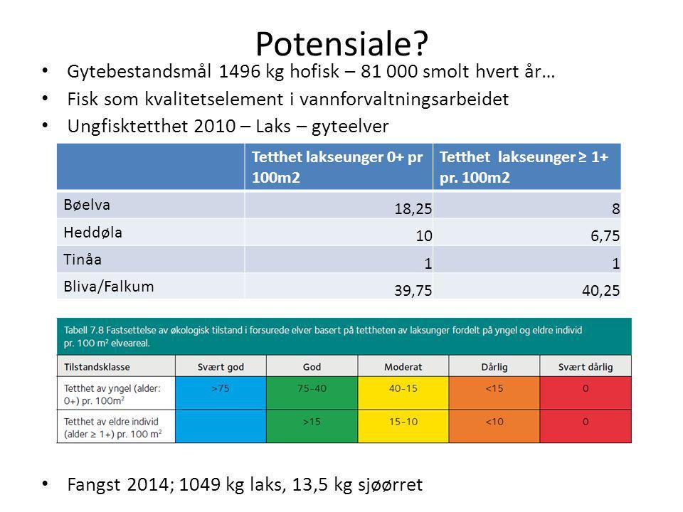 Potensiale Gytebestandsmål 1496 kg hofisk – 81 000 smolt hvert år…