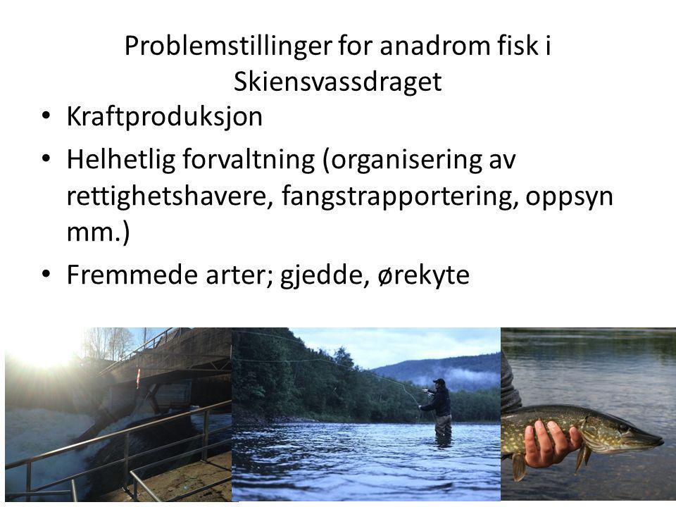 Problemstillinger for anadrom fisk i Skiensvassdraget