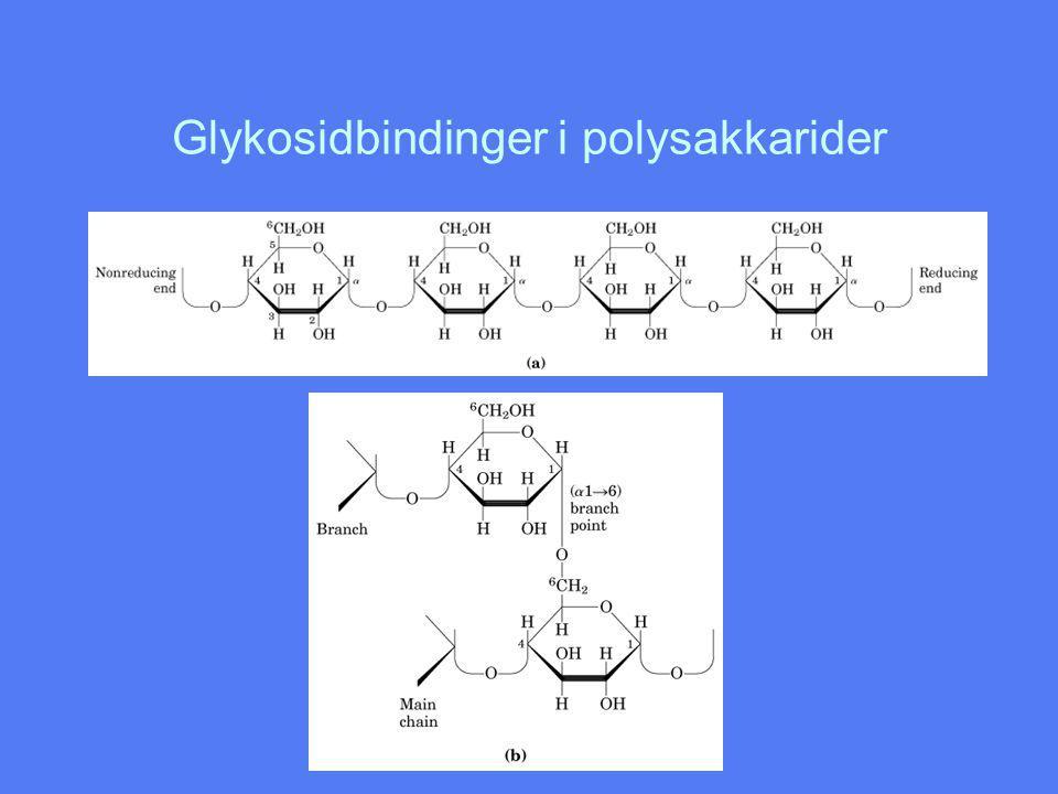 Glykosidbindinger i polysakkarider