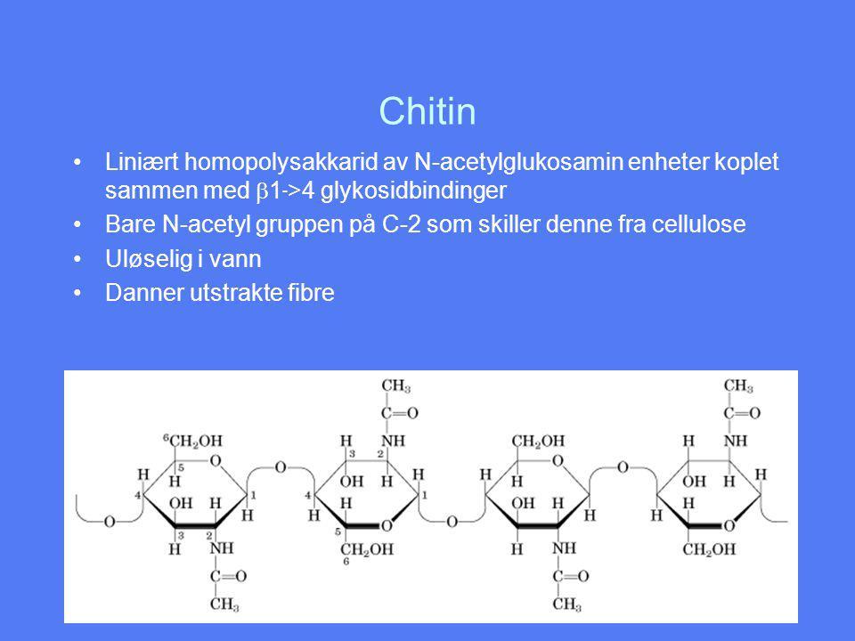 Chitin Liniært homopolysakkarid av N-acetylglukosamin enheter koplet sammen med b1->4 glykosidbindinger.
