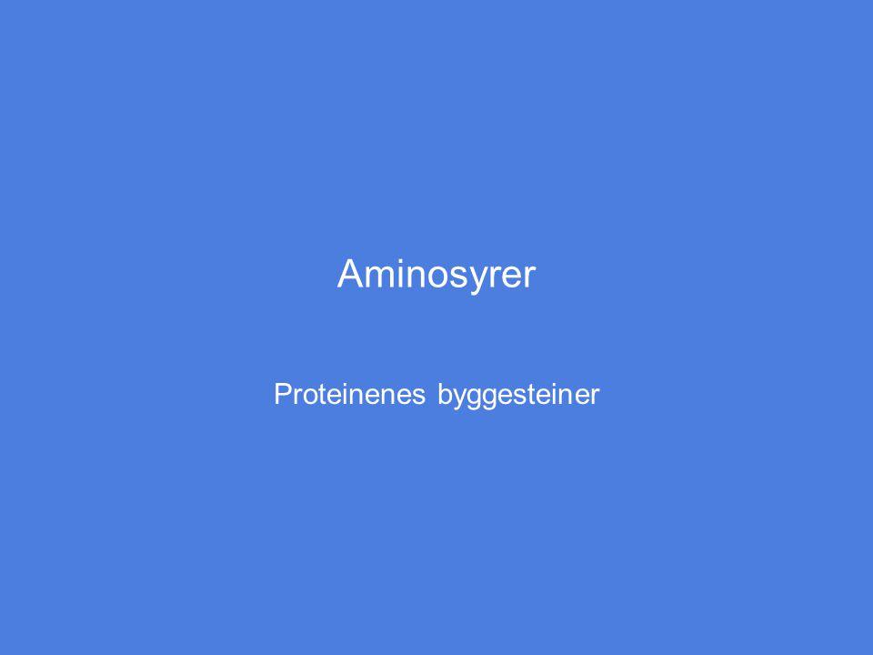Proteinenes byggesteiner
