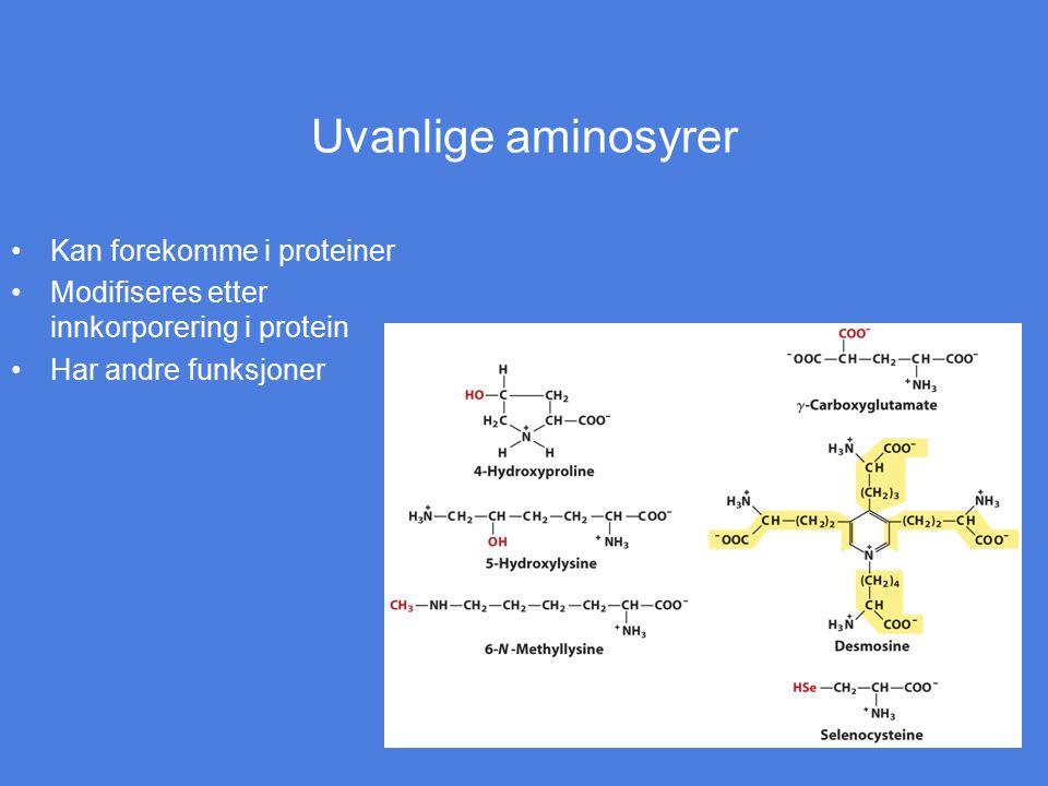 Uvanlige aminosyrer Kan forekomme i proteiner