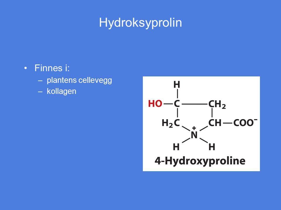 Hydroksyprolin Finnes i: plantens cellevegg kollagen