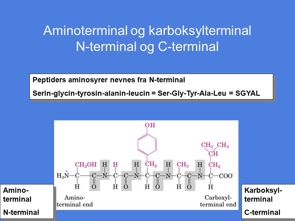 Aminoterminal og karboksylterminal N-terminal og C-terminal