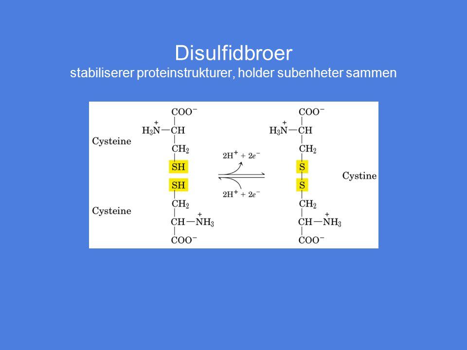 Disulfidbroer stabiliserer proteinstrukturer, holder subenheter sammen