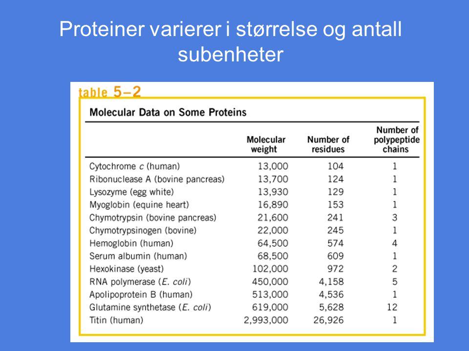 Proteiner varierer i størrelse og antall subenheter