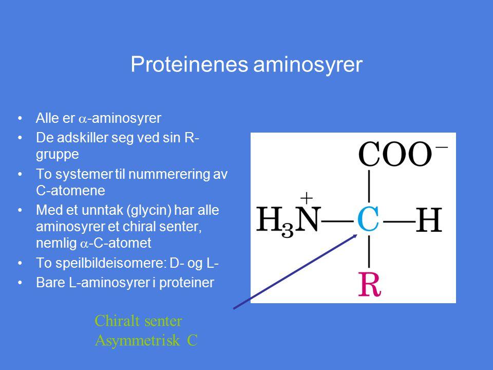 Proteinenes aminosyrer