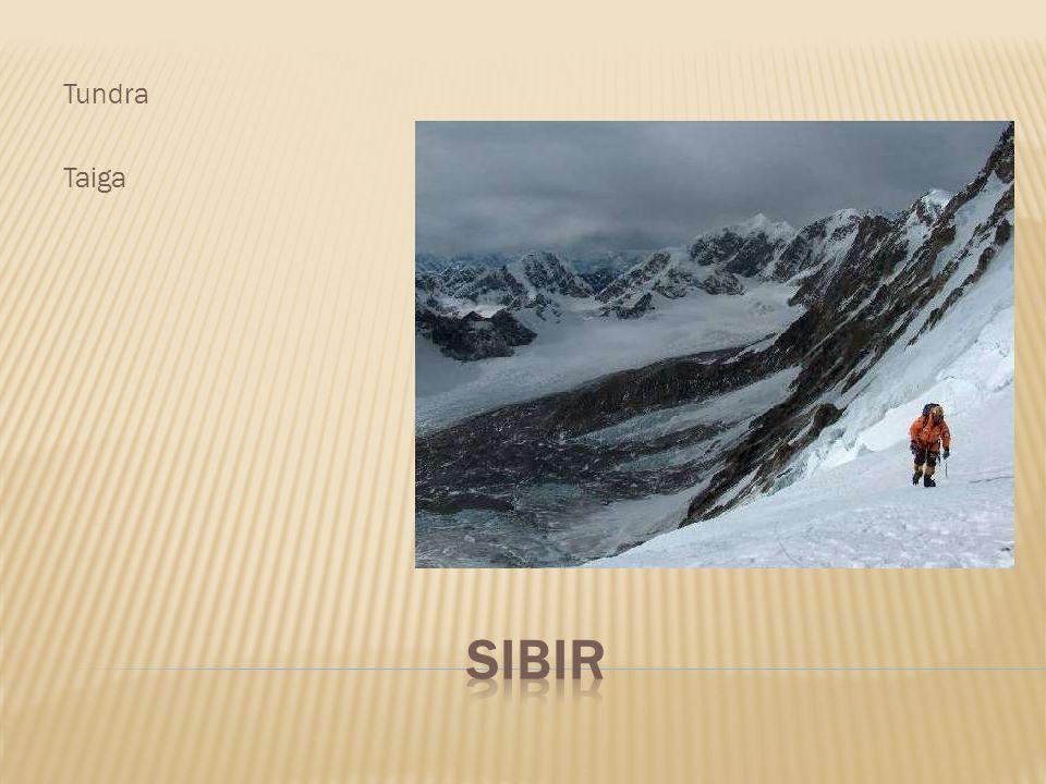 Tundra Taiga Sibir