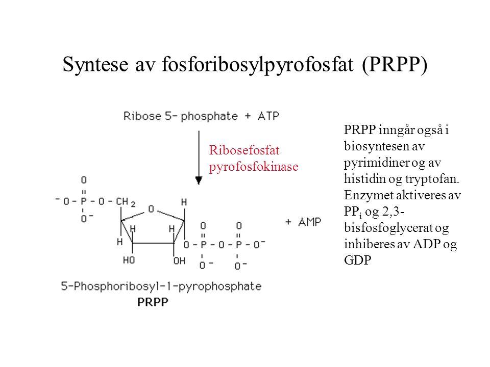 Syntese av fosforibosylpyrofosfat (PRPP)