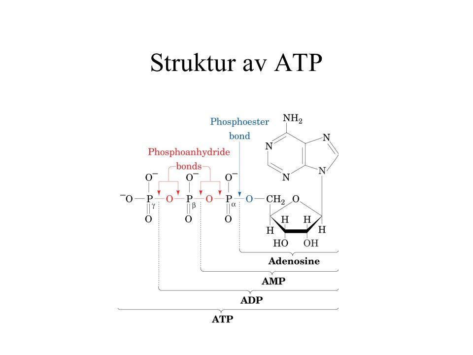 Struktur av ATP