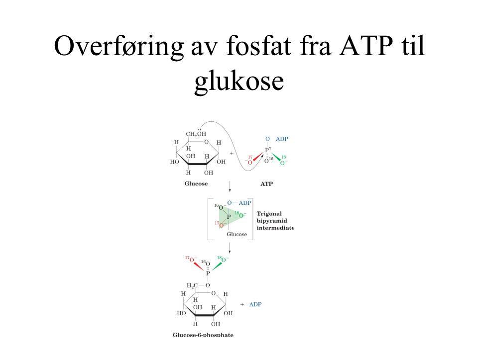 Overføring av fosfat fra ATP til glukose