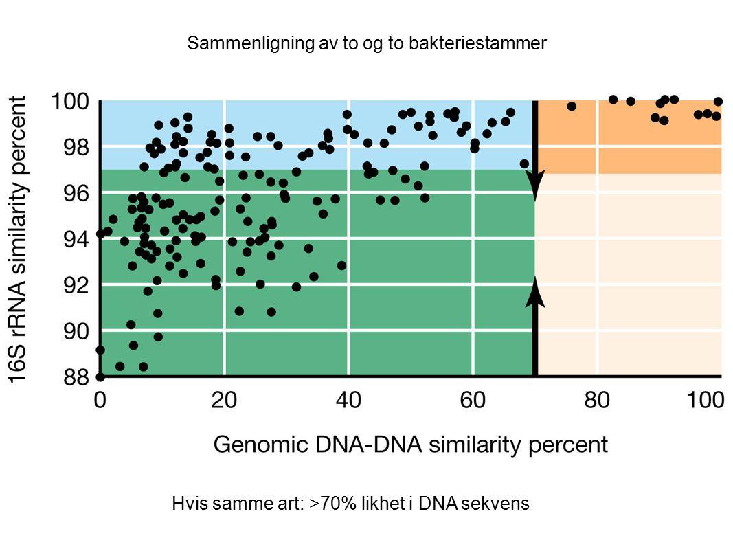 Sammenligning av to og to bakteriestammer