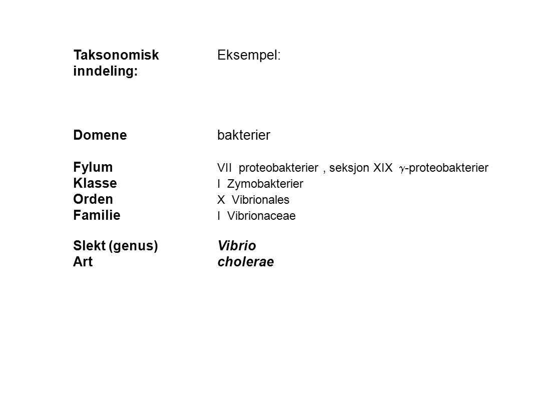 Taksonomisk Eksempel: