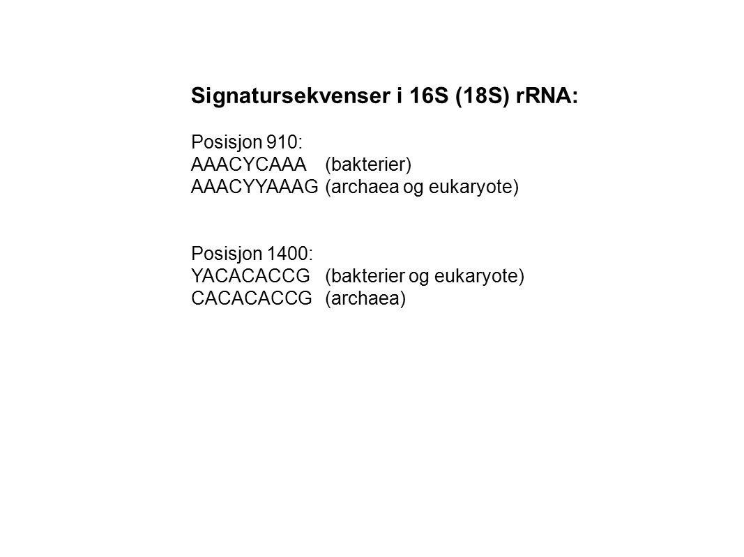 Signatursekvenser i 16S (18S) rRNA: