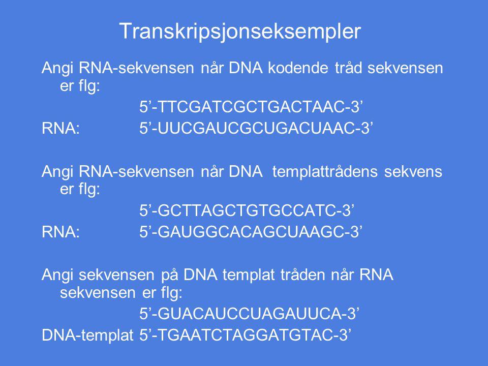 Transkripsjonseksempler