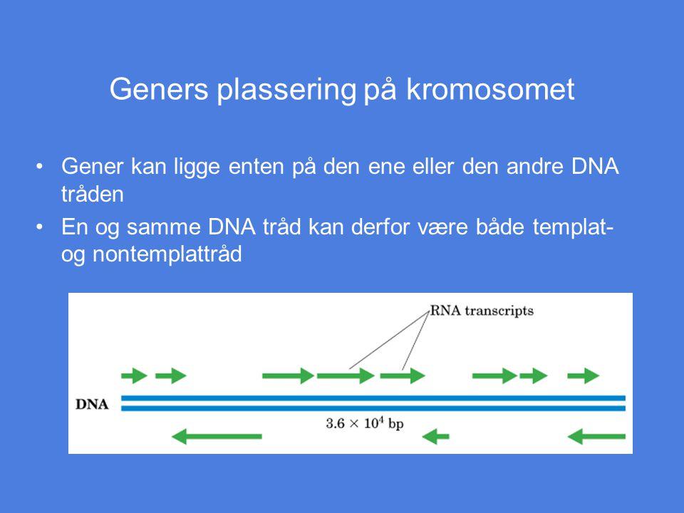 Geners plassering på kromosomet