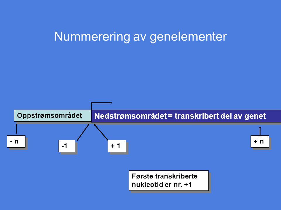 Nummerering av genelementer