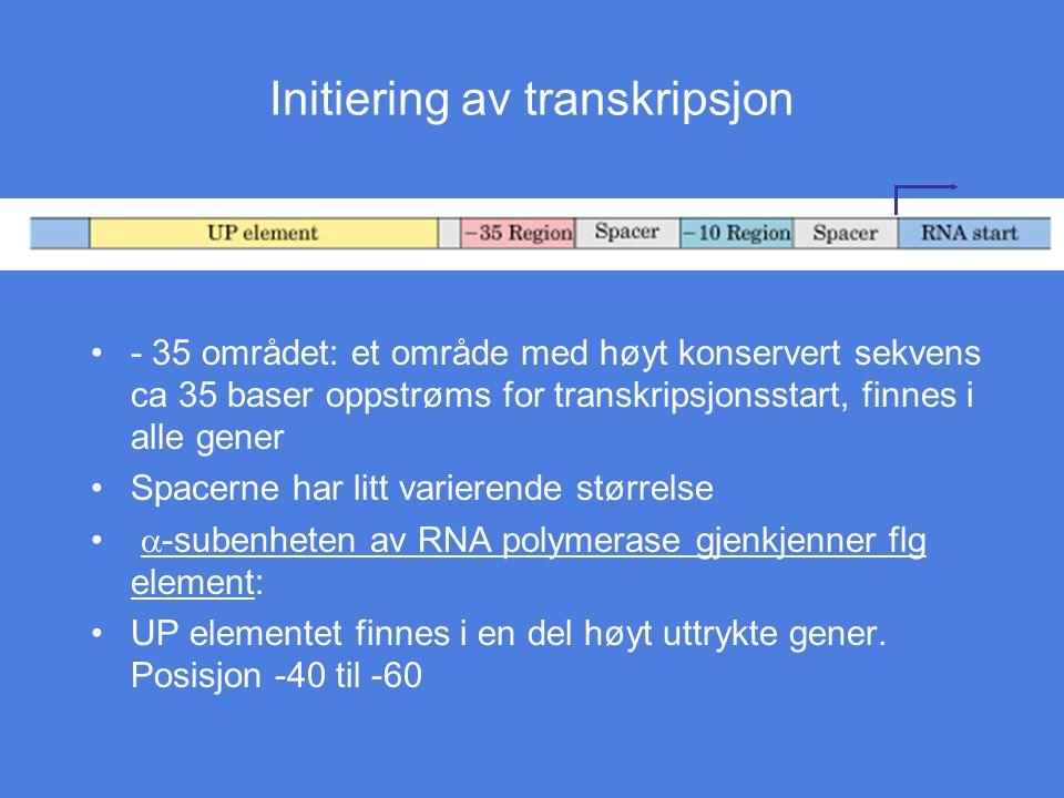 Initiering av transkripsjon