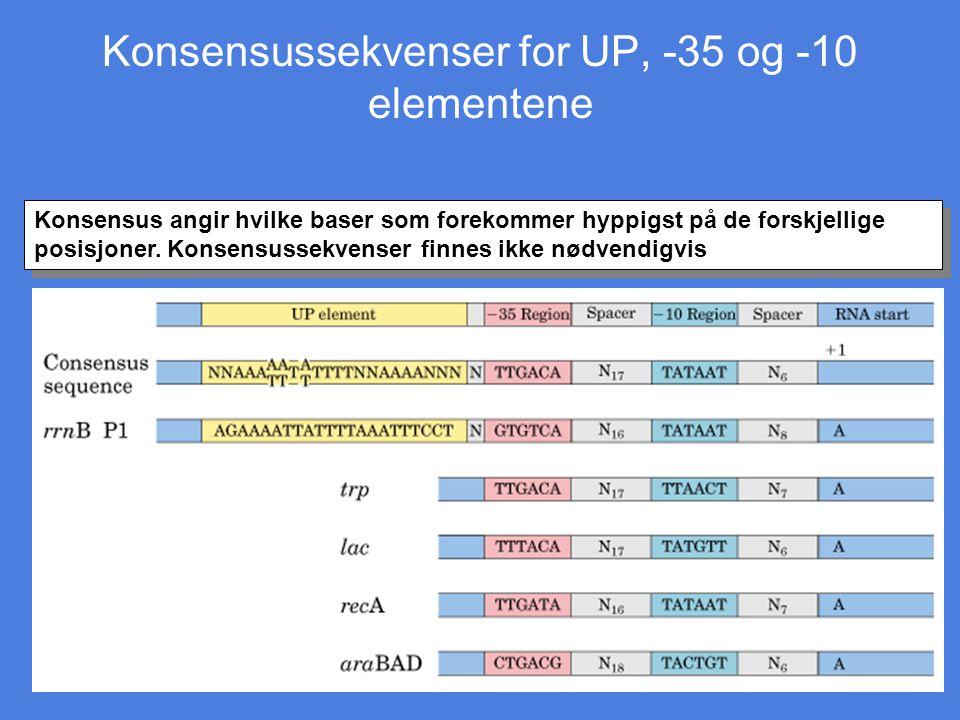Konsensussekvenser for UP, -35 og -10 elementene