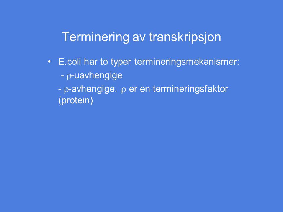Terminering av transkripsjon
