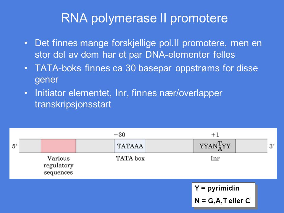 RNA polymerase II promotere