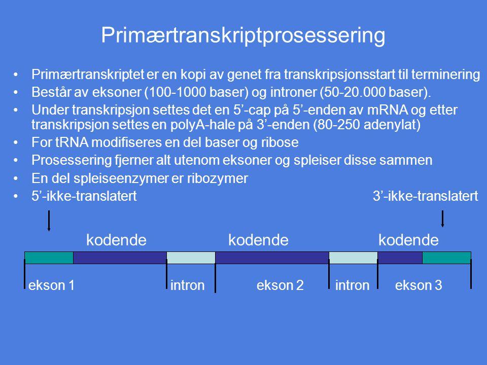 Primærtranskriptprosessering