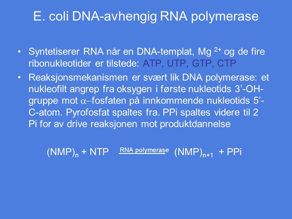 E. coli DNA-avhengig RNA polymerase